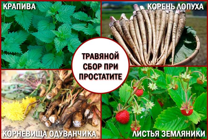 Лечебный травяной сбор от простатита