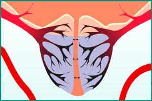 Улучшить кровоснабжение простаты
