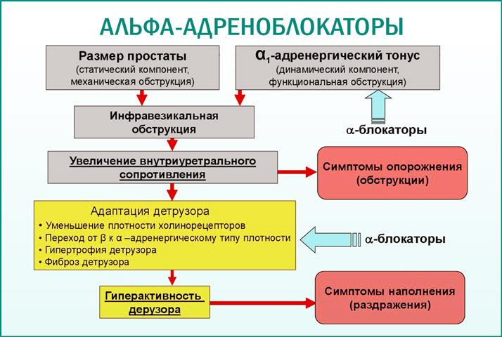 a адреноблокаторов в урологии