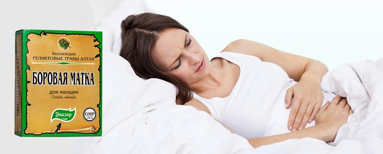 Боровая матка: польза применение при цистите