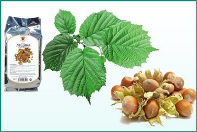 Лекарственное растение лещина