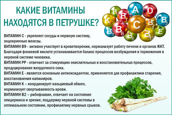 Петрушка богата витаминами