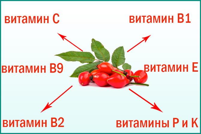 Содержание витаминов в шиповнике