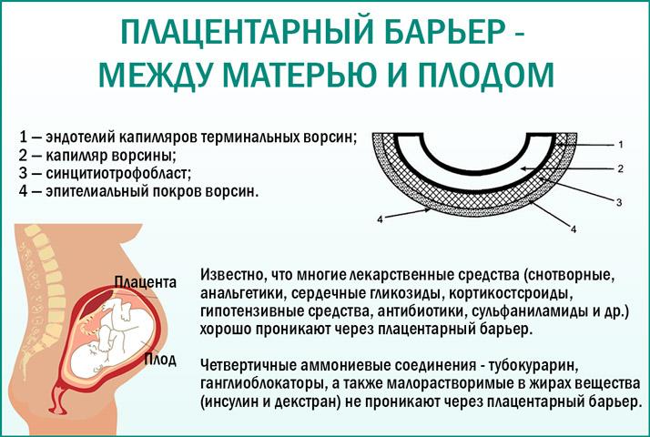 Барьер плаценты
