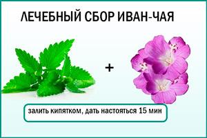 Иван-чай и мята - полезный напиток