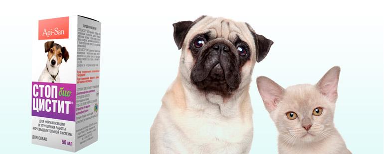 Стоп-цистит в лечении животных