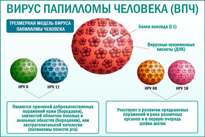 Папилломавирусы человека