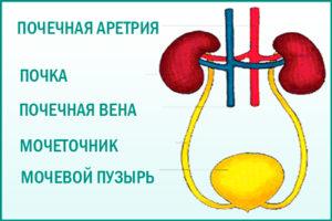 Патологии почечных артерий