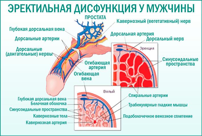 Эректильная дисфункция: причины