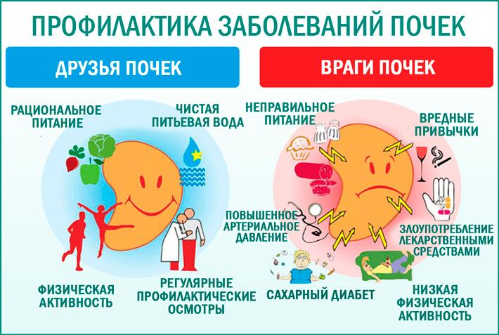 Болезнь почек: профилактика