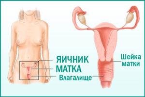 Частое мочеиспускание у женщины