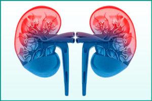 Пиелонефрит: заболевание почек