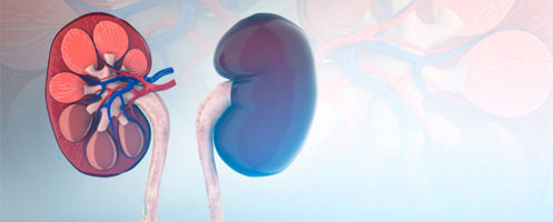 Симптомы метастазы в почках - Пищеварительная система