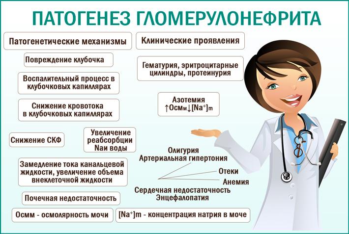 Гломерулонефрит этиология, патогенез