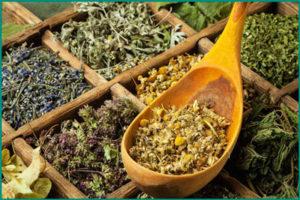 Мочегонные травяные сборы для лечения пиелонефрита