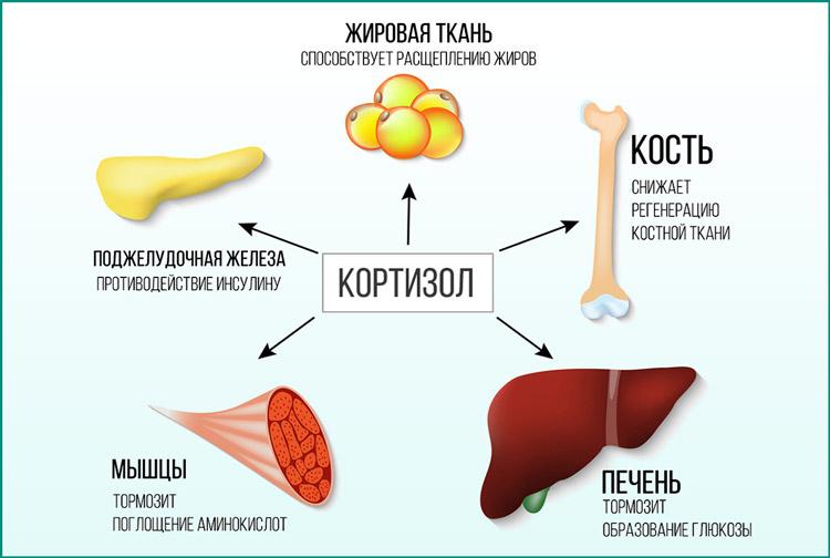 Суточный анализ мочи на кортизол 25