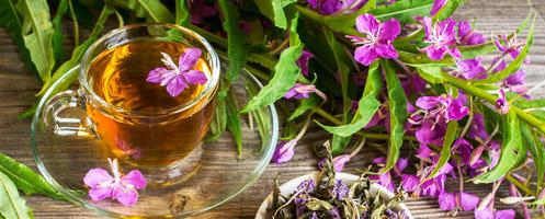 Иван-чай - трава для исцеления половой слабости у мужчин