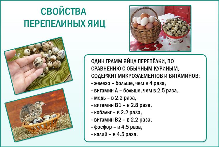 Польза перепелиных яиц