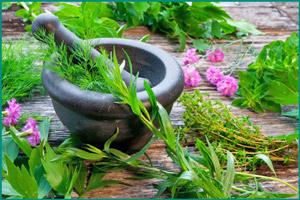 Травяные сборы для потенции