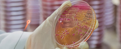 Лечение бактериурии у ребенка