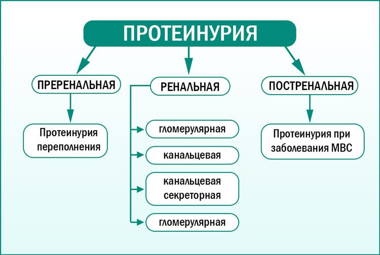 Виды протеинурии