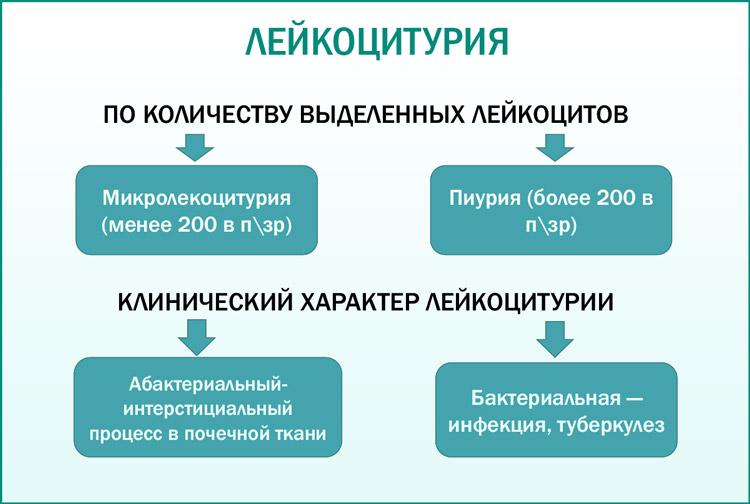 Виды лейкоцитурии