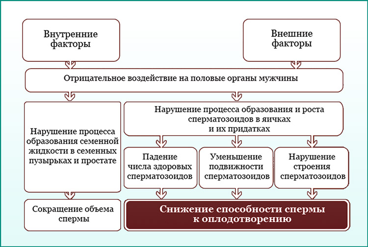 Факторы уменьшения спермы